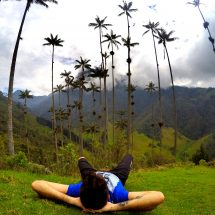 cocora-valley-palm