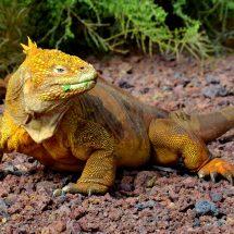 galapagos-islands-wildlife